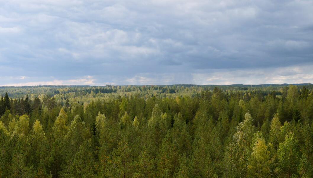 Målingene av luft ble gjort i her i Hyytiälä, sør i Finland. Juho Aalto