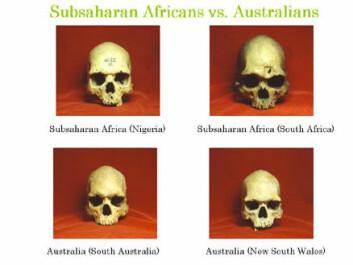 """""""Bildet viser hodeskaller fra forskjellige verdensdeler. Bilde: Tsunehiko Hanihara."""""""