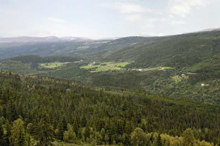 Slik ville samme område i Gudbrandsdalen som på bildet over se ut hvis de fleste setrene og gårdene ble lagt øde. (Foto: Anders Bryn. Fotomanipulering: Jon Skille Amundsen)