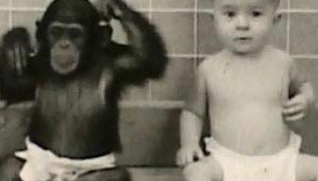 Kan en ape oppdras som et barn?