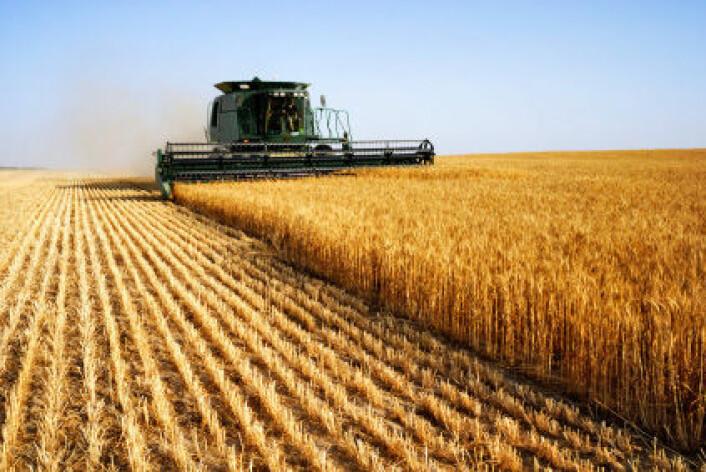 Kan produktene fra moderne landbruk gi oss helseplager som vi ikke er gentisk tilpasset til? (Foto: iStockphoto)