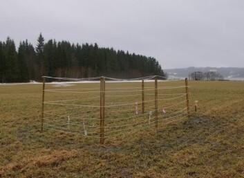 Beitebur av den typen brukt i dette forsøket i Steinkjer kommune. (Foto: Jarle W. Bjerke)
