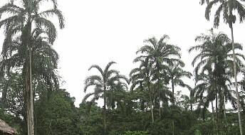 - Vi kan for lite om palmer