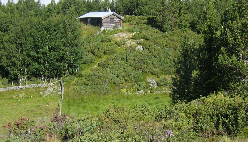 For 40 år siden var landskapet rundt Venåssætra helt åpent, med grasrik beitemark. Nå tar einer, vier, furu, gran og bjørk over landskapet. Anders Bryn