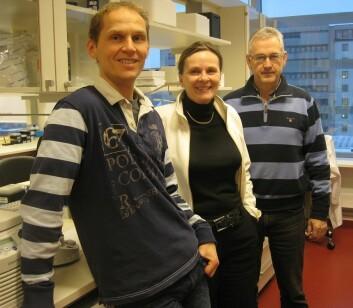 Professor Ragnhild A. Lothe sammen med sine samarbeidspartnere forsker Rolf Inge Skotheim (t.v.), også ved Institutt for kreftforskning, OUS, og professor og kliniker Arild Nesbakken (t.h.) ved Gastrokirurgisk avdeling, OUS. Foto: privat