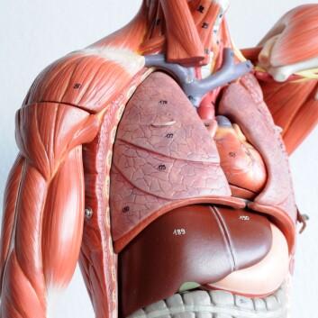 Seks av ti tarmkreftpasienter med spredning til lever som fikk transplantert ny lever, overlevde. Det er ti ganger flere enn de som overlever med cellegift. (Foto: Colourbox)