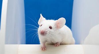 Forskere fant hint om hvordan bakterier i tarmen påvirker Alzheimers