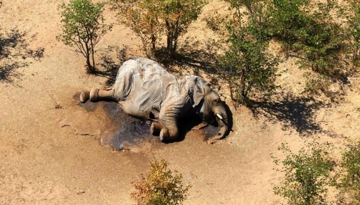 Nå vet eksperter litt mer om hva som kan ha drept nær 300 elefanter i Botswana