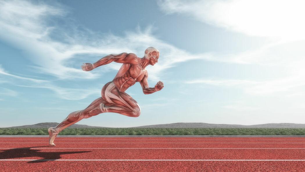 Kosttilskuddet Beta-alanin brukes ofte av toppidrettsutøvere for å øke nivået av peptidet carnosin i musklene og gi økt styrke og utholdenhet. Carnosin kan også virke beskyttende mot nyreskade.