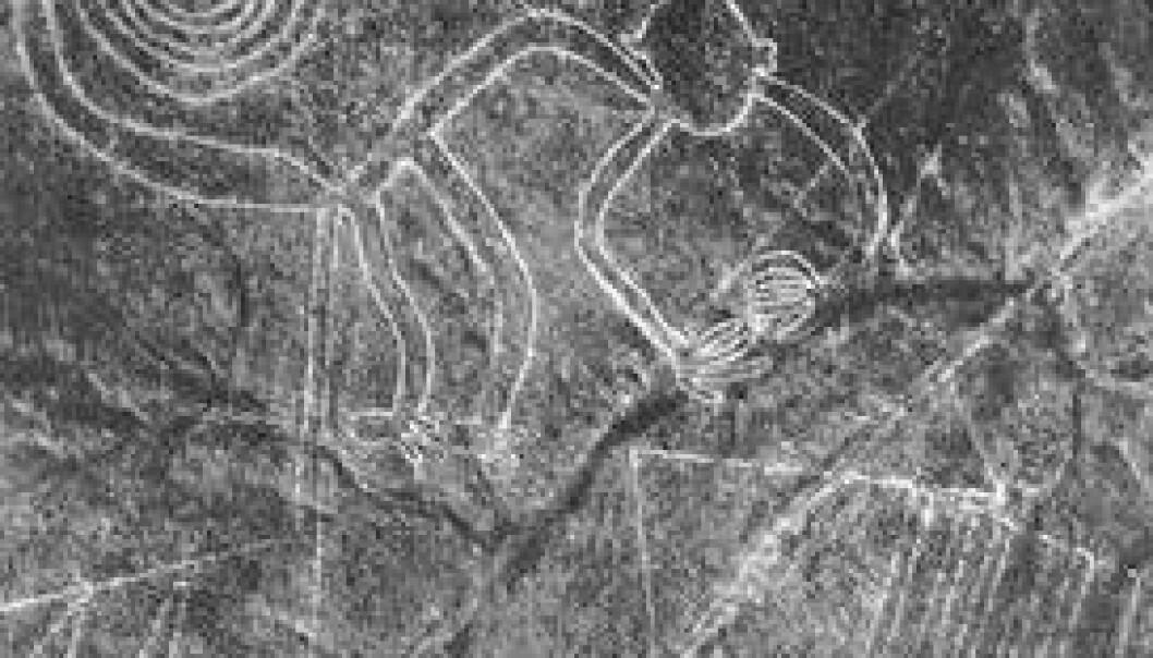 Nazca-linjer som førestiller ein apekattfigur. Biletet er tatt av arkeologen Maria Reiche i 1953. cc/Maria Reiche