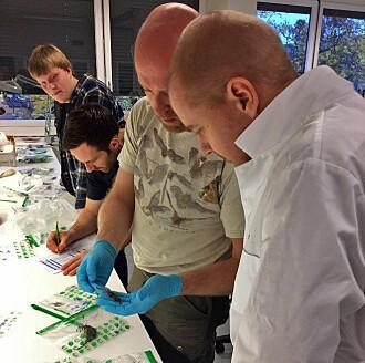 Forskeren Jeroen van der Kooij hjelper til med artsbestemming av mus og andre småpattedyr. Masterstudentene Fredrik Munkelien (bakerst) og Harald Linløkken følger spent med, mens avdelingsingeniør Anders Herland (helt til høyre) fra CEES holder oversikten.