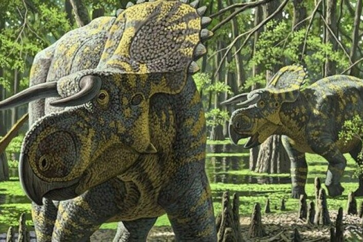 Dette er Nasutoceratops titusi, slik en kunstner har forestilt seg det levende dyret. (Foto: Raul Martin/The Royal Society)