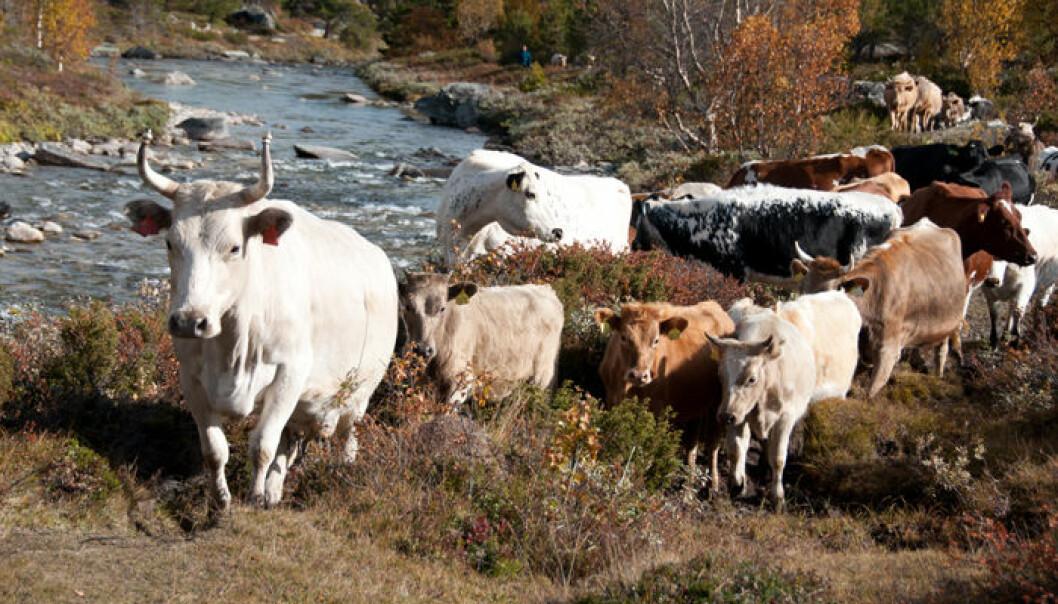Truede norske husdyrraser