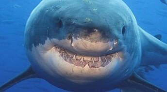 Over 300 haier er nå på Twitter