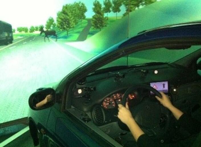 Varsel om elg i veibanen via dashbordet får bilførerne til å reagere raskere enn tradisjonelle varselskilt langs veien. (Foto: Sintef)