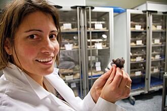 Professor i molekylær biologi, Marianne Fyhn er prosjektleder for DigiBrain.