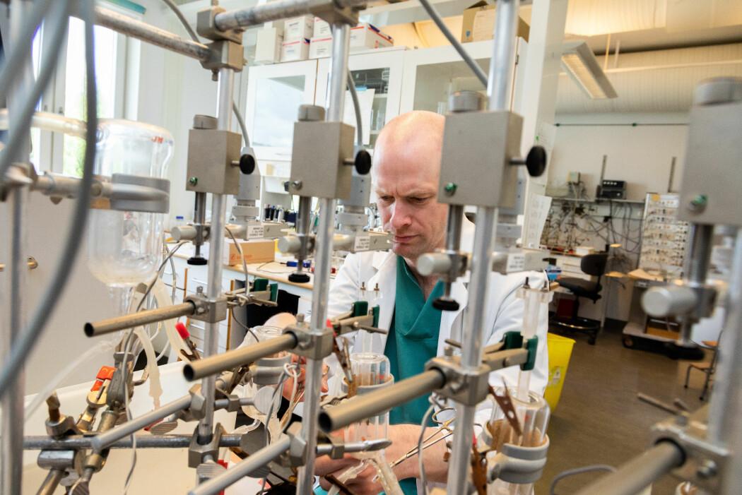 I dette sinnrike apparatet kan Jan Magnus Aronsen teste hvordan endret konsentrasjon av kalium påvirker pumpefunksjonen og den elektriske stabiliteten til levende muskelbiter. Her undersøker han både hjertemuskler fra dyr og mennesker. Hjertemusklene fra mennesker fås når pasienter donerer bort det syke hjertet sitt fra en hjertetransplantasjon.