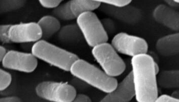 B. cereus-stammen NVH 0075/95 produserer Nhe-toksin og er brukt i dette forskningsprosjektet. Danh Phung