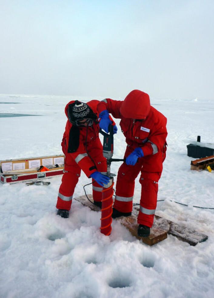 Forskere tar prøver ved å drille gjennom sjøisen (Foto: Mar Fernández-Méndez, Alfred Wegener Institute)