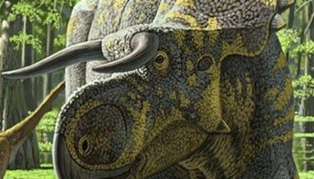 Dette er Nasutoceratops titusi, slik en kunstner har forestilt seg det levende dyret. Raul Martin/The Royal Society