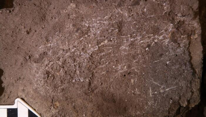 Gress-fragmentene som forskerne mener ble brukt som sengematter inne i hulen.