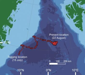 """""""Kartet viser hvor Simon svømte mellom Grønland og Svalbard den første måneden."""""""