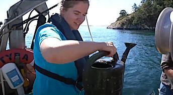Revebur, plastposer og annet skrot blir dødsfeller på havbunnen