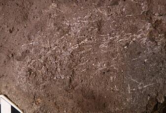 Dette er rester av en 200 000 år gammel seng, tror forskere