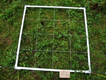 Det skjer store forandringer i vegetasjonen etter hogst. Dette bildet er fra året før hogsten ble foretatt. Vegetasjonsruten er dominert av blåbærlyng, mose og hårfrytle. (Foto: Ingvald Røsberg, Skog og landskap)