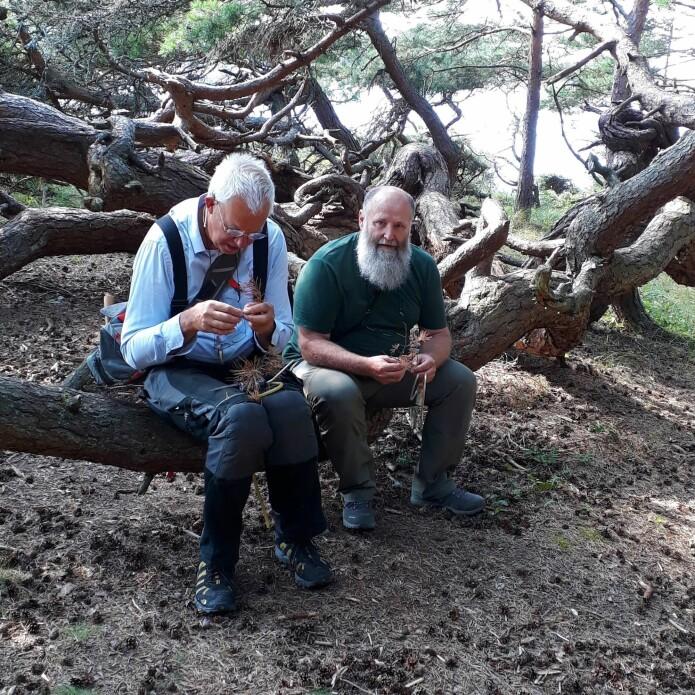 Barkbilleforskerne Åke Lindelöw og Milos Knizek på feltarbeid i Norge.