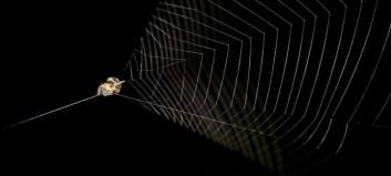 Edderkoppen bruker nettet som sprettert