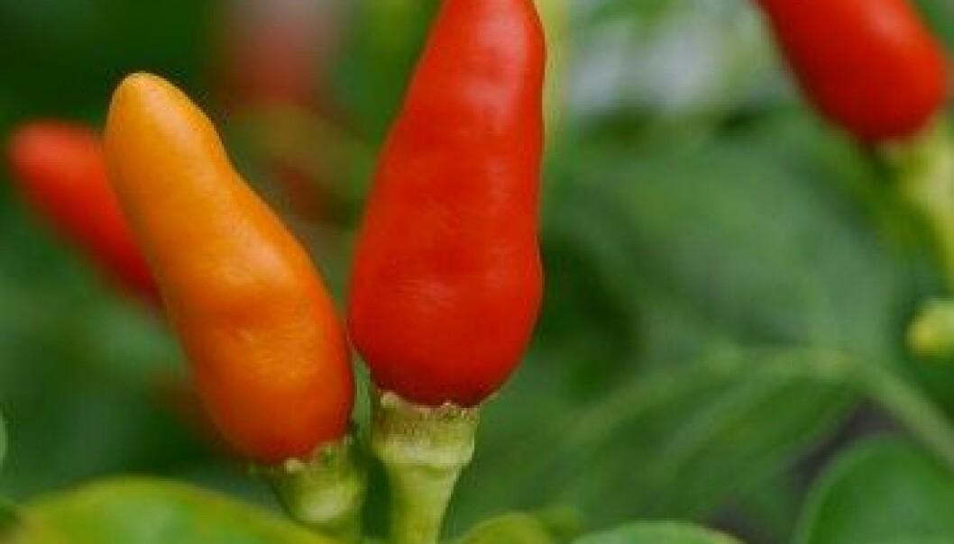 Planter kommuniserer for å hjelpe hverandre med å vokse