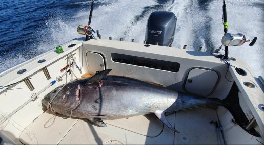 Stangfisket etter makrellstørje er i gang