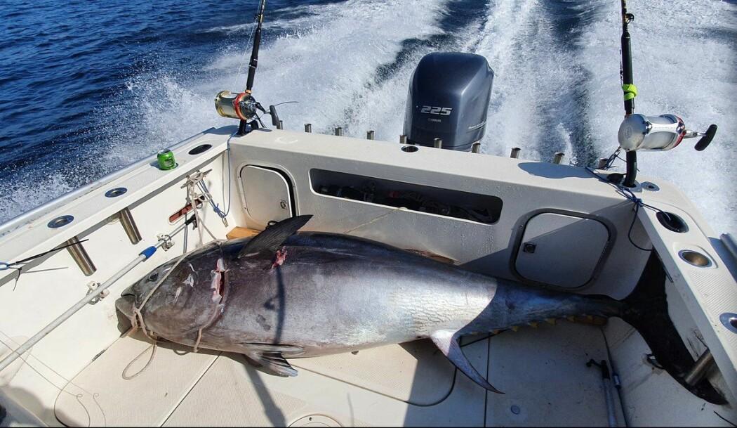 Den første størja ble landet av Team Blega Southern Tuna i Skagerrak etter stor innsats fra alle om bord. Laget tok med seg fisken og har dermed brukt sin rekreasjonsfiskekvote.