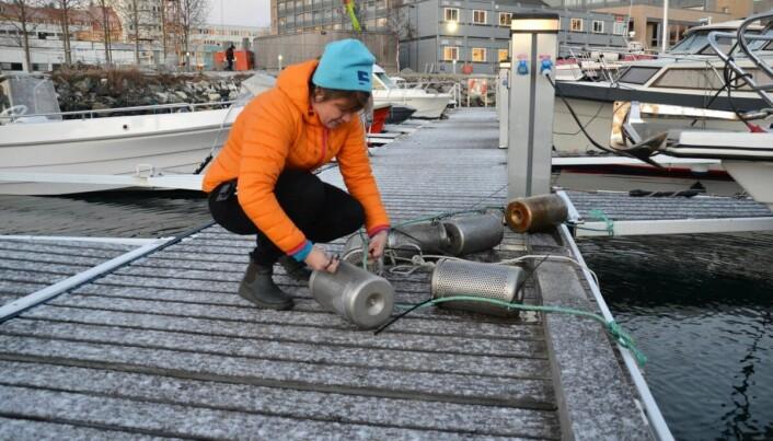 Dorte Herzke tar opp teine som samler opp blant annet plastpartikler som havner i sjøen.