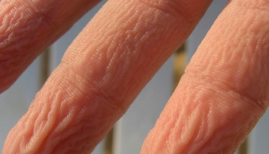"""Når vi får rynkete fingre etter en større sjau ved oppvaskkummen gjør det oss kanskje bedre i stand til å holde fast på krystallglassene. <a href=""""http://www.flickr.com/photos/notanyron/470795046/sizes/l/"""">Theron LaBounty/Flickr Creative Commons</a>"""