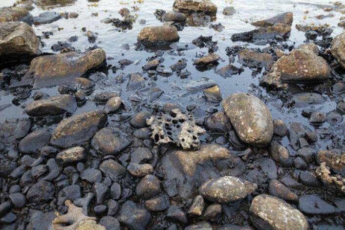 Ny forskning viser at selv små oljeutslipp i Arktis kan innebære at hele næringskjeden bryter sammen. (Foto: Colourbox)