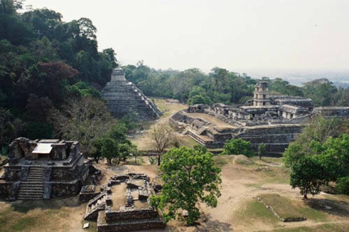 Forskere har funnet spor av maya-sivilisasjonens bruk av naturressurser i genene til en sjelden art elveskilpadde. Bildet viser en mayaby i Mexico. (Foto: iStockphoto)