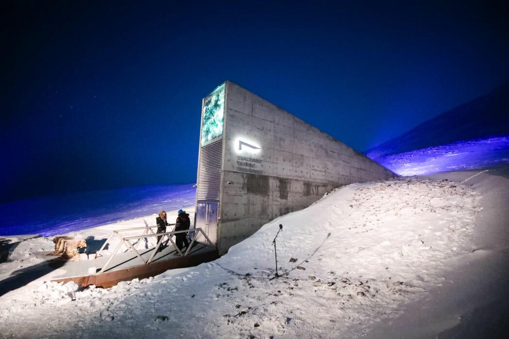 Et eksperiment ved Svalbard globale frøhvelv skal bringe på det rene hvor lenge frø kan leve uten å miste spireevnen.