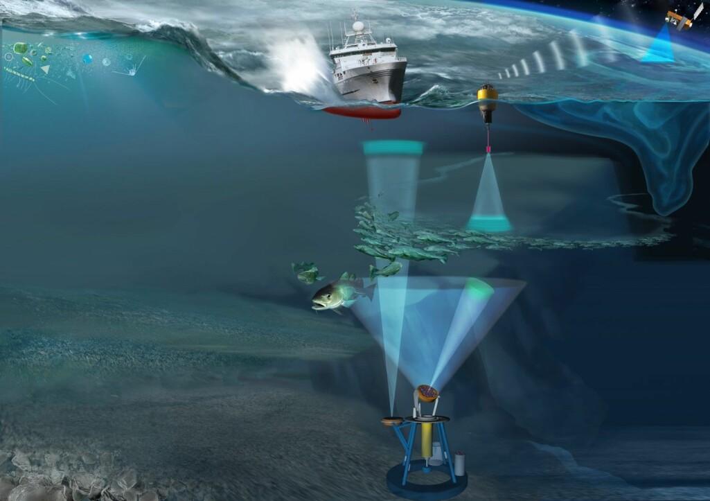 Ved hjelp av undervannsteknologi kan alle nå følge temperaturforholdene, havstrømmer, koraller i området, lyder under vann og ekkolodd-data – direkte via nett.