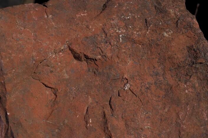 Rødvitret overflate av bergarten rødberg fra Gruveåsen i Fensfeltet. Thoriummineralene er ørsmå og sitter finfordelt i bergarten. (Foto: Sven Dahlgren)