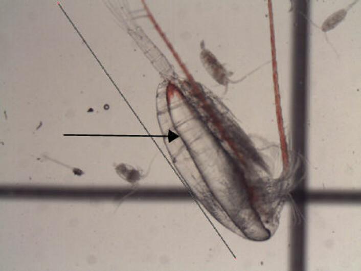 Hoppekreps, som også kalles copepoder, er en liten gruppe skalldyr som lever i nesten alle tenkelige former for vann på jorden. De lever under alle temperaturer fra ekvator til Arktis og i alle typer vann, både i ekstremt salt sjøvann og i ferskt sjøvann. Hoppekrepsenes larver er den viktigste næringskilden for mange fiskelarver og derfor en fundamental del av hele næringskjeden. Det finnes i alt 13.000 hoppekrepsarter.