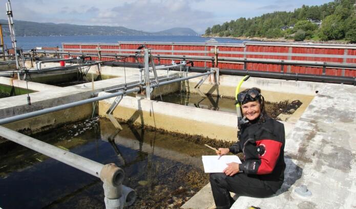 I tidevannsbasseng på Solbergstrand undersøker forsker Eli Rinde både naturlig og menneskeskapt påvirkning på livet i havet.