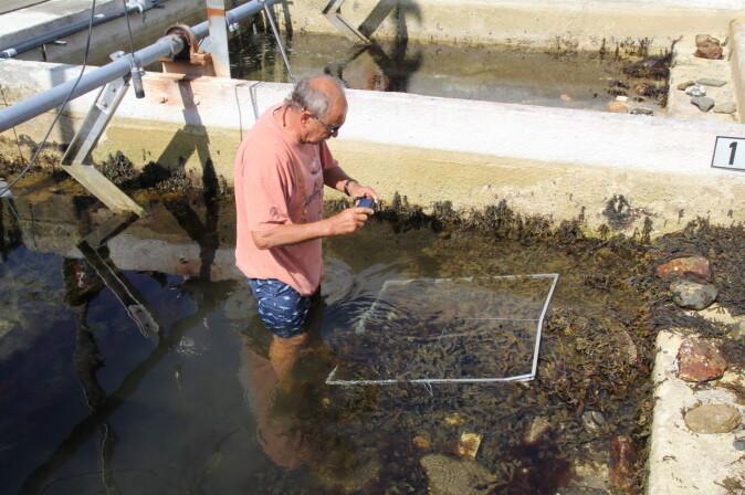 I store tidevannsbasseng på land har forskerne konstruert forskjellige typer naturtro, marine kystøkosystem. Med tolv slike basseng, kan man teste ulike påvirkningsfaktorer hver for seg – og sammen.
