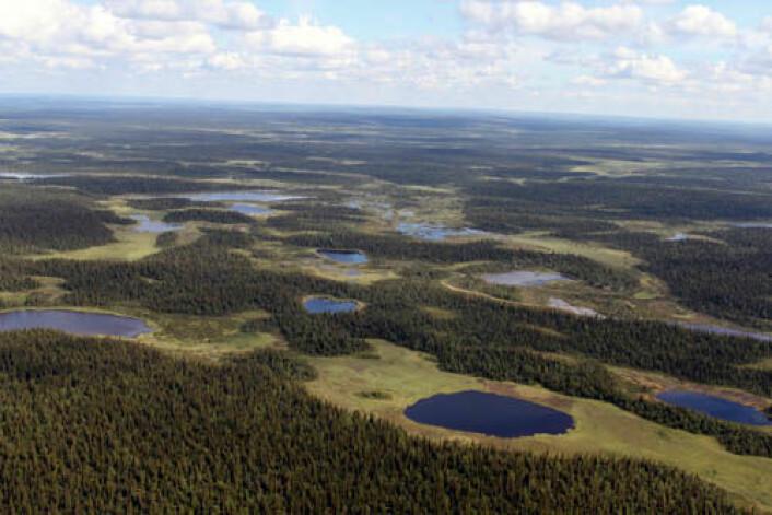 Panorama fra Russlands Imadra-Varzuga grønnsteinsbelte, hvor en del av boringen i FAR DEEP-prosjektet fant sted. (Foto: Victor Melezhik)
