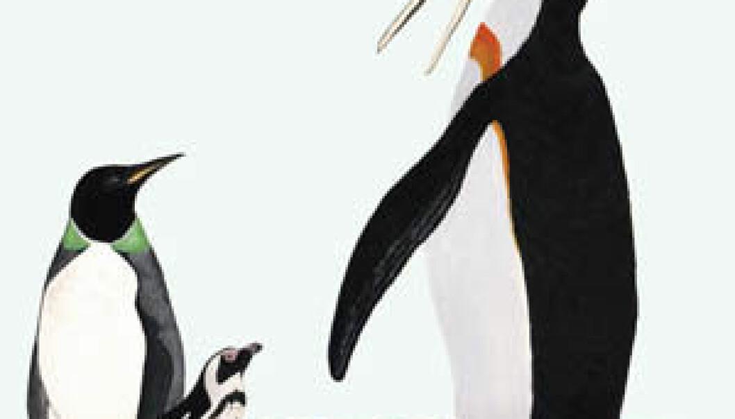 """""""Urpingviner: Kjempepingvinen Icadyptes salasi til høyre, Perudyptes devriesi til venstre. Tassen i midten er den eneste pingvinen som i dag bor i Peru, Spheniscus humbolti. Den største pingvinen kunne strekke seg godt over 150 centimeter i høyden."""""""
