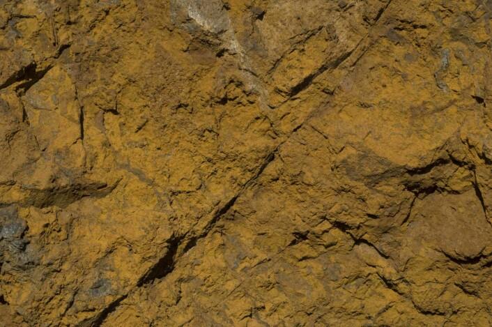 """Brunvitret overflate av ankerittkarbonatitt (""""rauhaugitt""""). Også i denne bergarten forekommer thoriummineralene som svært små, finfordelte korn. (Foto: Sven Dahlgren)"""