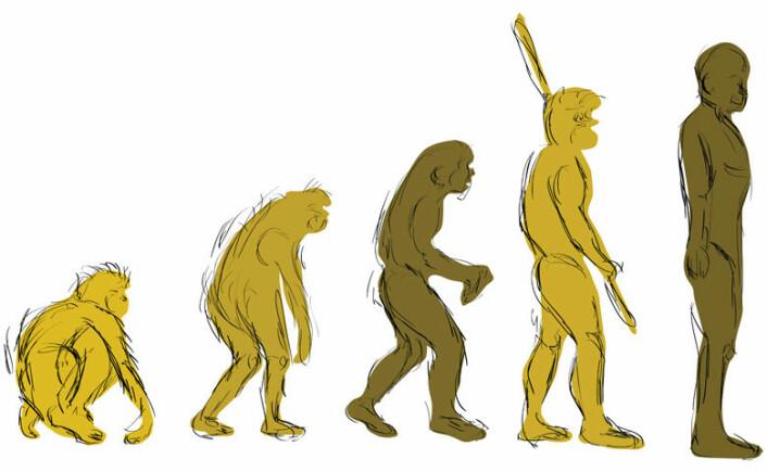 Kreasjonismen vokser i Europa, hvor forskere har problemer med å trenge gjennom med de vitenskapelige bevisene for evolusjonsteorien. En ny studie viser at det skyldes at kreasjonisme er blitt gjort til et kulturelt spørsmål, og dermed virker ikke vitenskapelige argumenter. (Foto: (Illustrasjon: Colourbox))