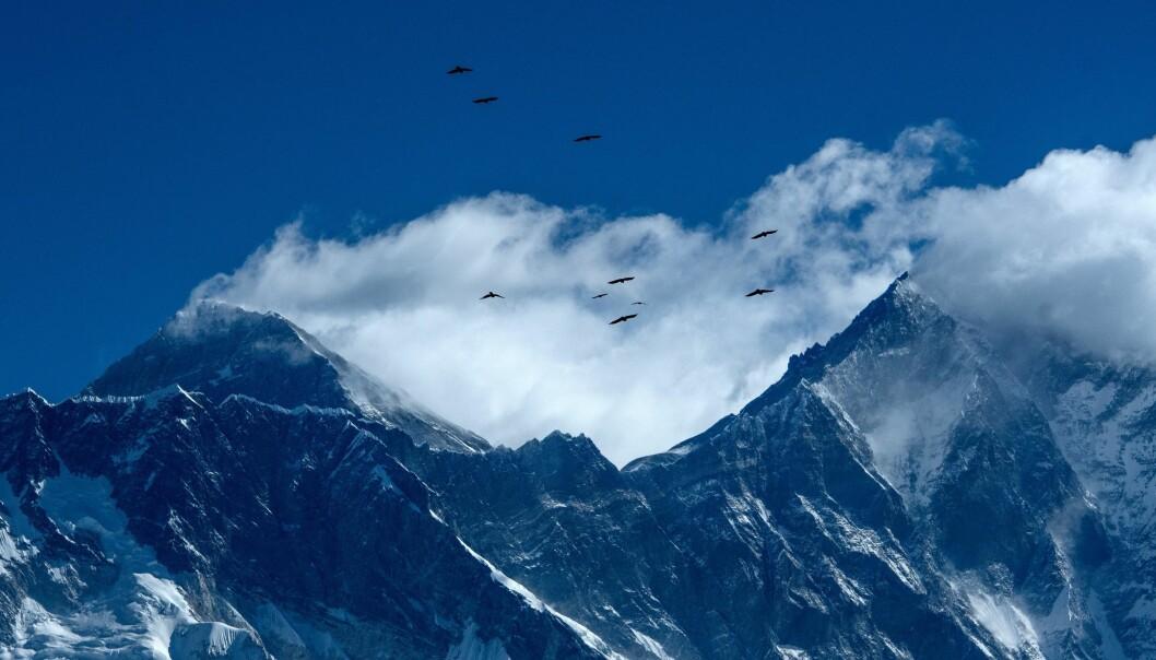 Mount Everest er toppen av verden, og relativt ugjestfritt. Mange har dødd i forsøket på å klatre helt opp. Men de siste årene har det blitt litt lettere å klare det, viser en ny studie. Forskere peker på tau, erfarne guider og værmeldinger som grunner til det.