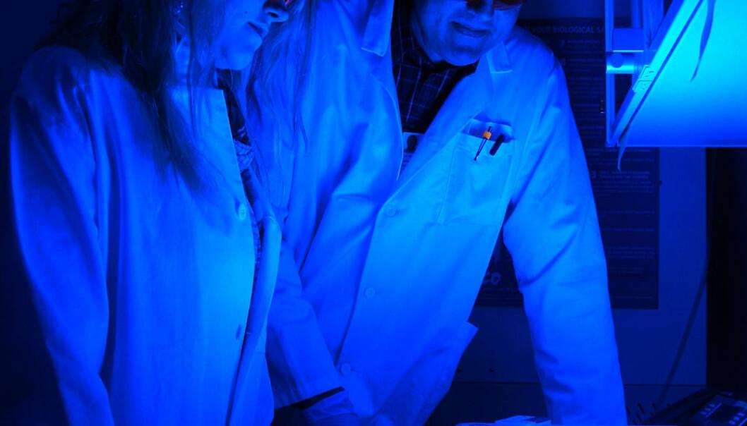 Monica Bostad og Pål Selbo studerer kreftceller i petriskåler på Radiumhospitalet. Arnfinn Christensen, forskning.no.